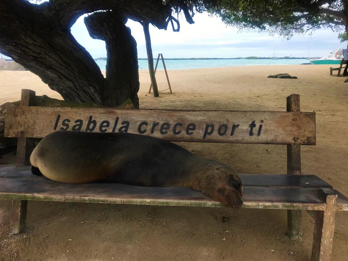 Sea Lion on Isabela Island
